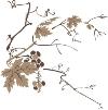 竹子荷花植物图-节日喜庆图片