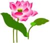 荷花 ()图片-竹子荷花植物图-节日喜庆图库