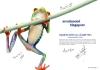 可爱青蛙图片-青蛙图-创意设计图库