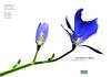 艺术之花图片-艺术之花图-花卉图库