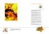 花卉图片-花卉图-花卉图库