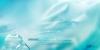 献给爱丽丝x寸图片-天之翼图-影楼摄影设计图库