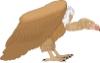 雀鸟图片-文字模板图-影楼摄影设计图库