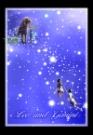 狮子座双子座图片-星语星愿图-影楼摄影设计图库
