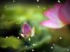 桔子香水图片-梦幻船图-影楼摄影设计图库